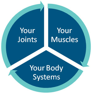 The relationship between your joints, muscles and body systems